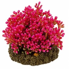 Растение DEZZIE 5610164 7см пластик блистер